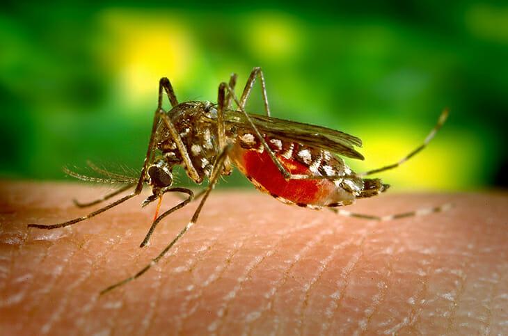 moustique voyage