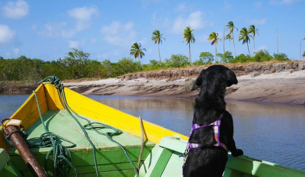 explorateur chien brésil