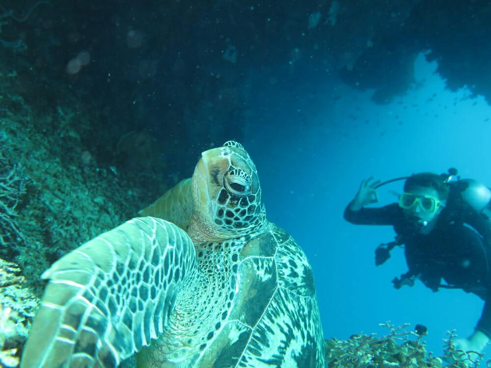 tortue philippines